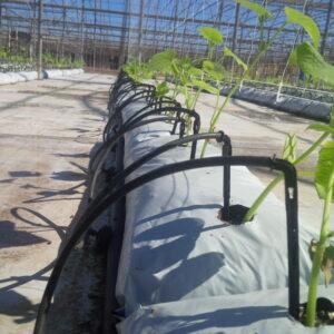 Drip irrigation nursery