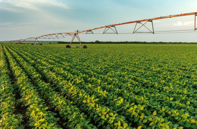 Irrigation sprinklers in young soybean field